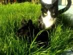 look at me, i'm crazy cat.jpg