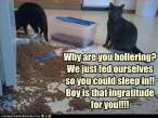 funny-pictures-cats-fed-themselves.jpg