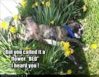 funny-dog-pictures-flower-bed.jpg